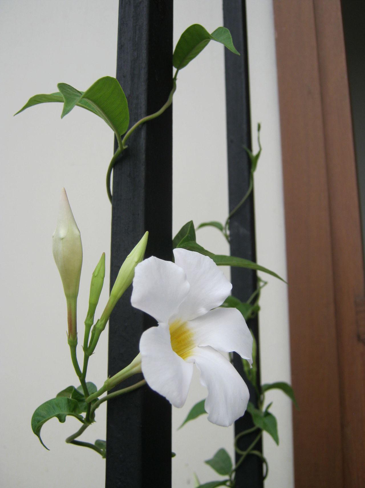 Original Photography Fresh Flowers Home Exterior White Flower