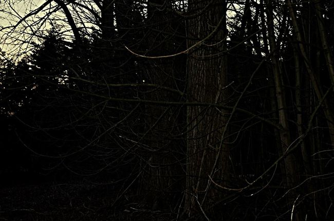 The Places I've Been Today today i was in the Wood there where a lot of Trees it was a little bit Creepy but i was there With a Friend so everything gonna be alright
