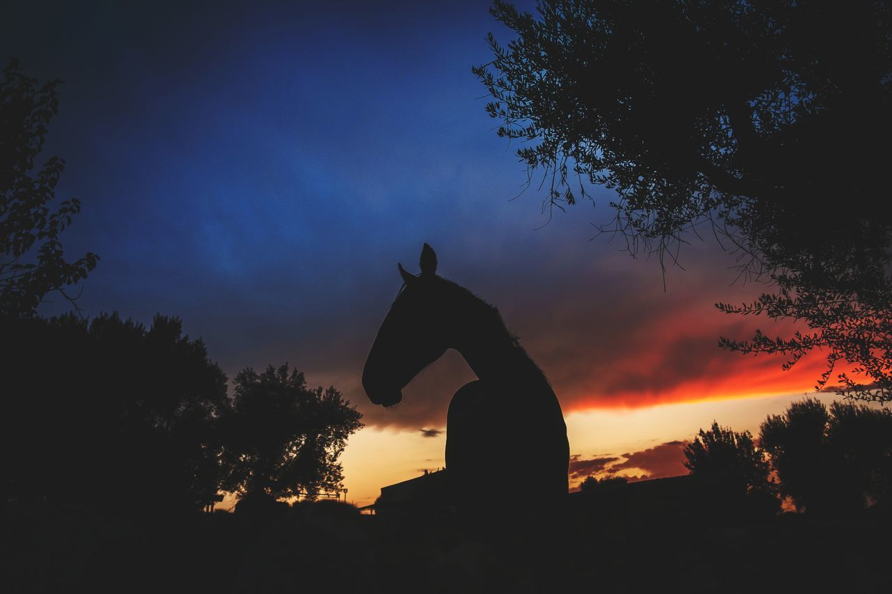 Silhouette Tree Sunset Animal Wildlife Animals In The Wild One Animal Night No People Animal Themes Nature Travel Photography Fujifilm_xseries Fujifilm Outdoors Sky Italy🇮🇹 Horse Horse Photography  Horse Silhouette