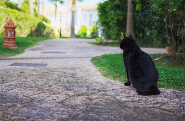 Animal Themes One Animal Pets Domestic Animals Domestic Cat Cat Feline Catlovers Cats Of EyeEm Cat Lovers Pet Cats Pet Cat Black Cat Black Cats Lovers Black Cat Love Black Cat Photography Black Cats Are Beautiful Black Cat Eyes Domestic Pet Domestic Pet Cat Pet Love Pet Lover My Pet Domestic Pets Black Color