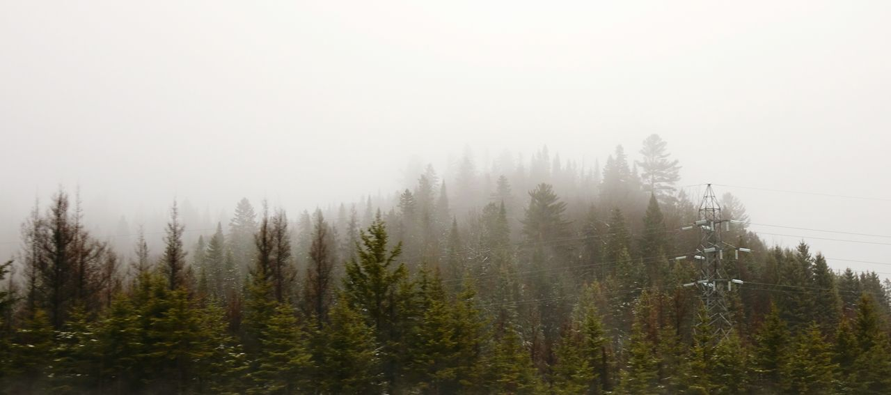 Panoramic View Of Trees Growing On Mountain In Foggy Weather