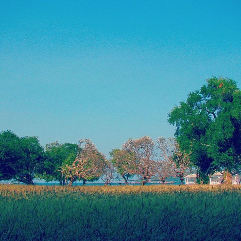 🚵🚴🏁Thailand Instarpic Instargram Tree Sea Beach