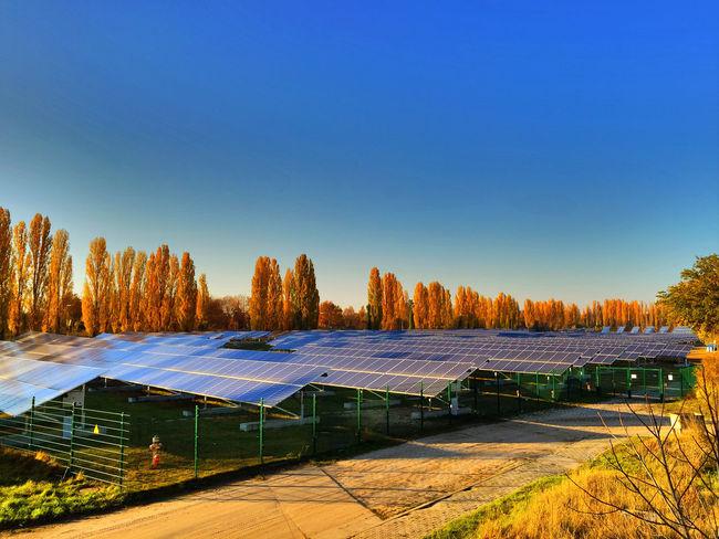 solar energy plant Solar Energy Plant Blue Sky Clear Sky Sky Solar Solar Collector Solar Energy Solar Panel Solar Panels Solar Plant Trees