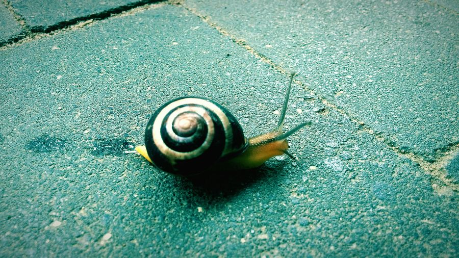 Snail in the city Snail🐌 Snail Street City Small Animal With Own Home