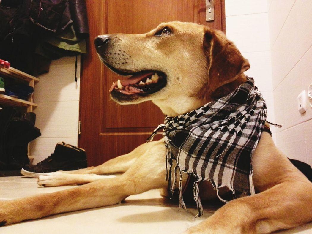 tao ! Dog Dogs Gorzów Wielkopolski Animal