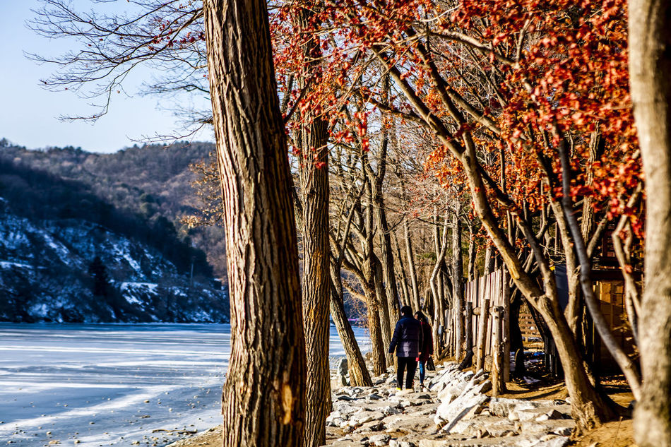 Beautiful stock photos of north korea, Branch, Chuncheon, Clear Sky, Cold