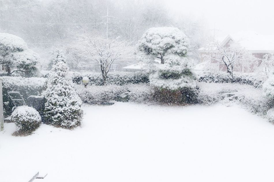 Beautiful stock photos of white, Cold, Cold Temperature, Day, No People