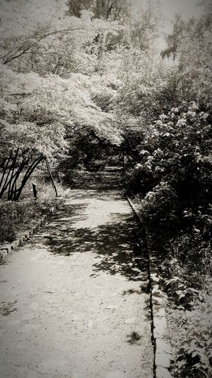 Way In Forest Mistic Sepia Sicret