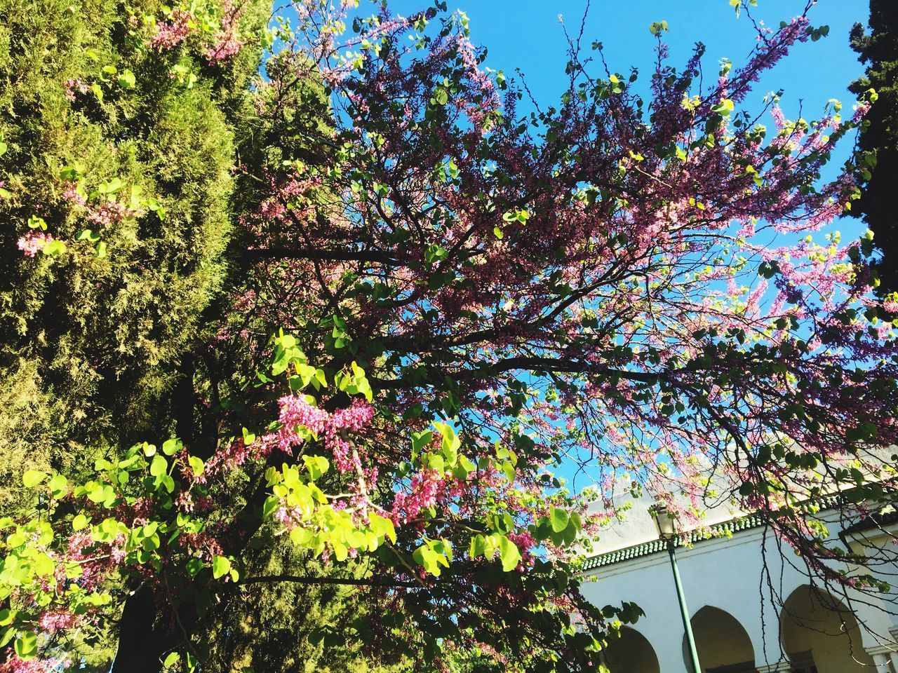 tree, growth, blossom, flower, beauty in nature, nature, branch, low angle view, springtime, botany, day, fragility, freshness, no people, outdoors, architecture, sky