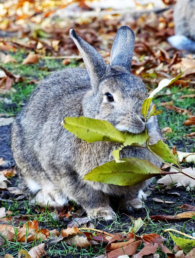 Rabbit Rabbits 🐇 Bunny 🐰 Cute Pets Pet Animal Animal Photography Animal Portrait Animal_collection Nature Ey