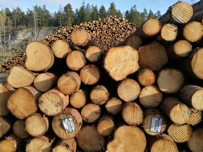 Colors And Patterns Stack Log Large Group Of Objects Timber Heap Repetition Forestry Industry Full Frame No People Arrangement Lumber Industry
