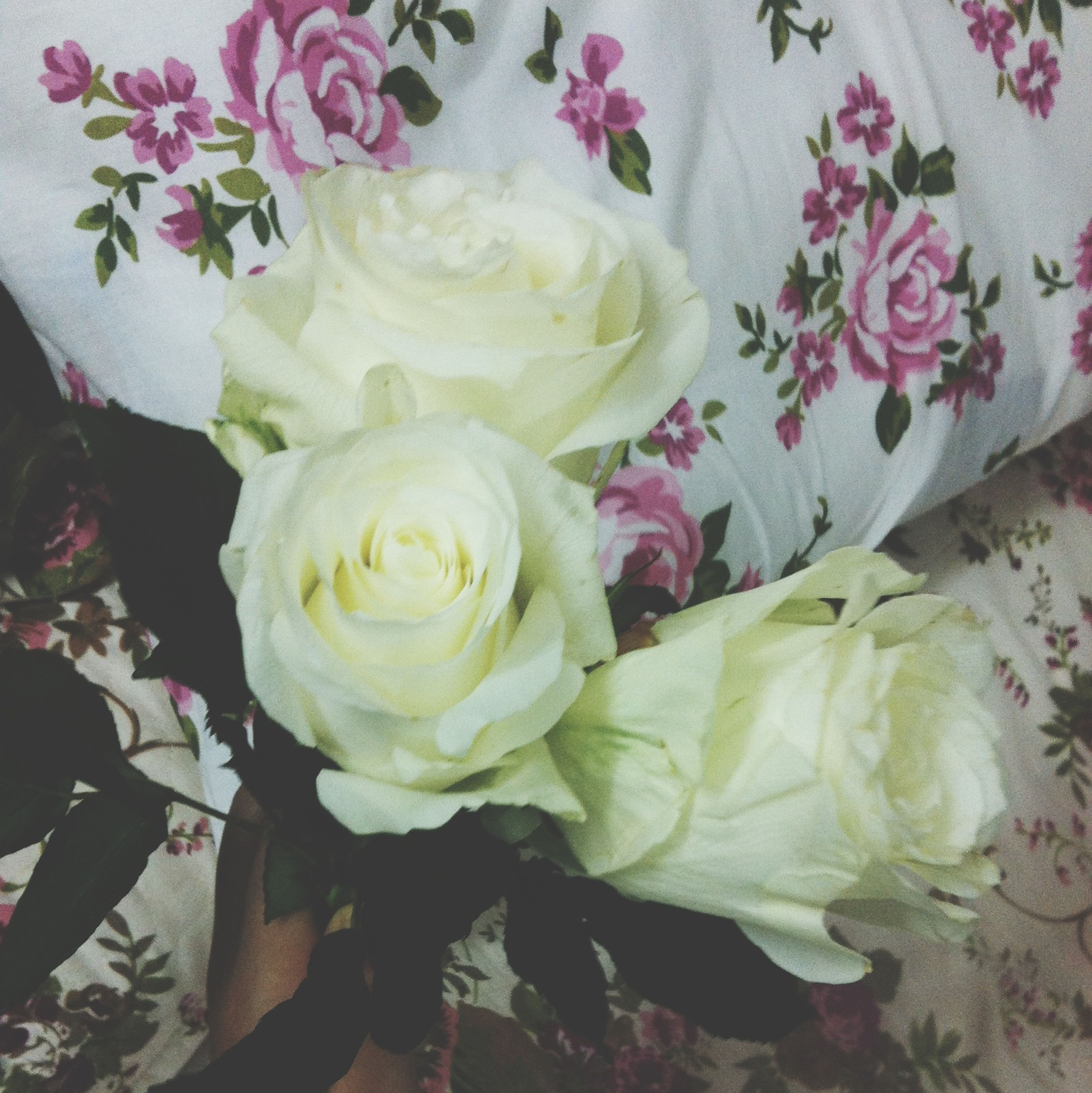 flower, rose - flower, freshness, petal, indoors, fragility, flower head, bouquet, pink color, beauty in nature, high angle view, close-up, rose, decoration, white color, vase, nature, growth, bunch of flowers, blooming