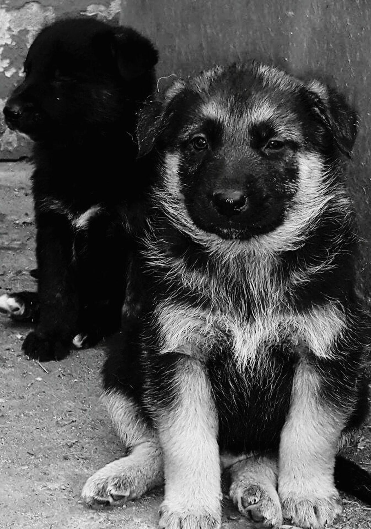 My Year My View Animal Themes Dog Pets Domestic Animals Dogs Dog❤ Dog Lover Doglover DogLove Dogoftheday Dog Portrait Dog Photography Dogmodel Doggy Doggy Love Dogphoto