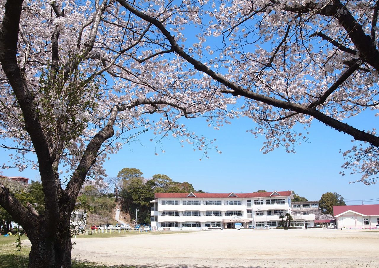 Architecture Beauty In Nature Branch Built Structure Cherry Blossoms Clear Sky Elementary School Nature No People Spring Has Arrived Tree
