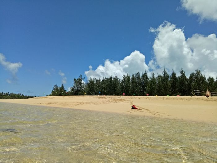beautiful golden sand, with pine trees and clear water @ jomalig, philippines