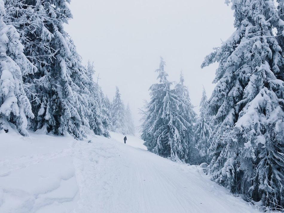 Winter Snow Cold Temperature Weather White Color Nature Covering Tree Beauty In Nature Frozen Tranquil Scene Tranquility Scenics Day Outdoors No People Mountain Sky Pastel