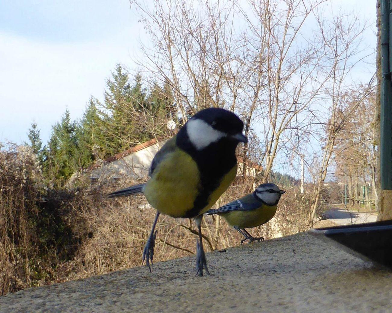 Birds Bird Oiseaux Animals Wildlife