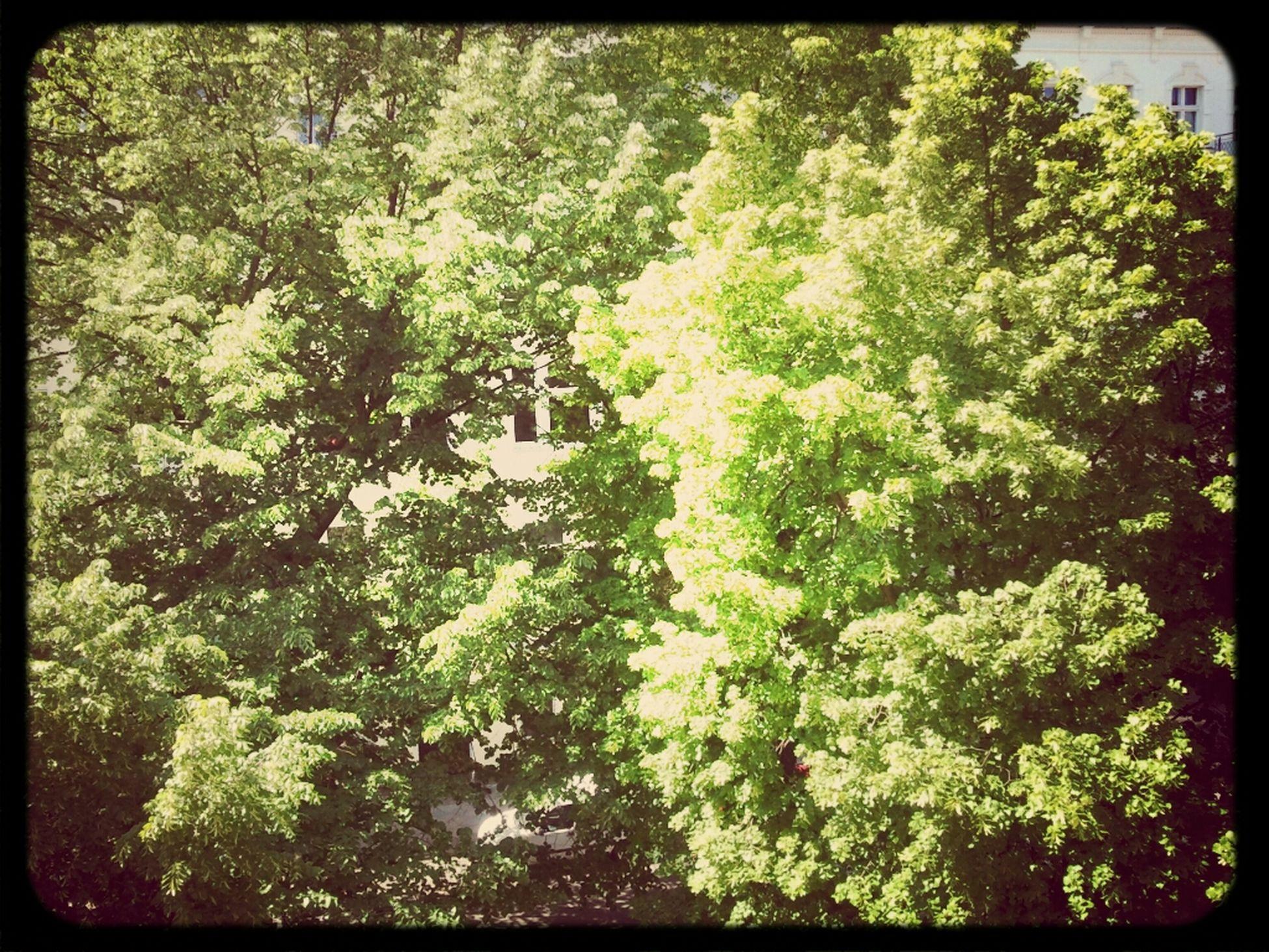 my balcony view