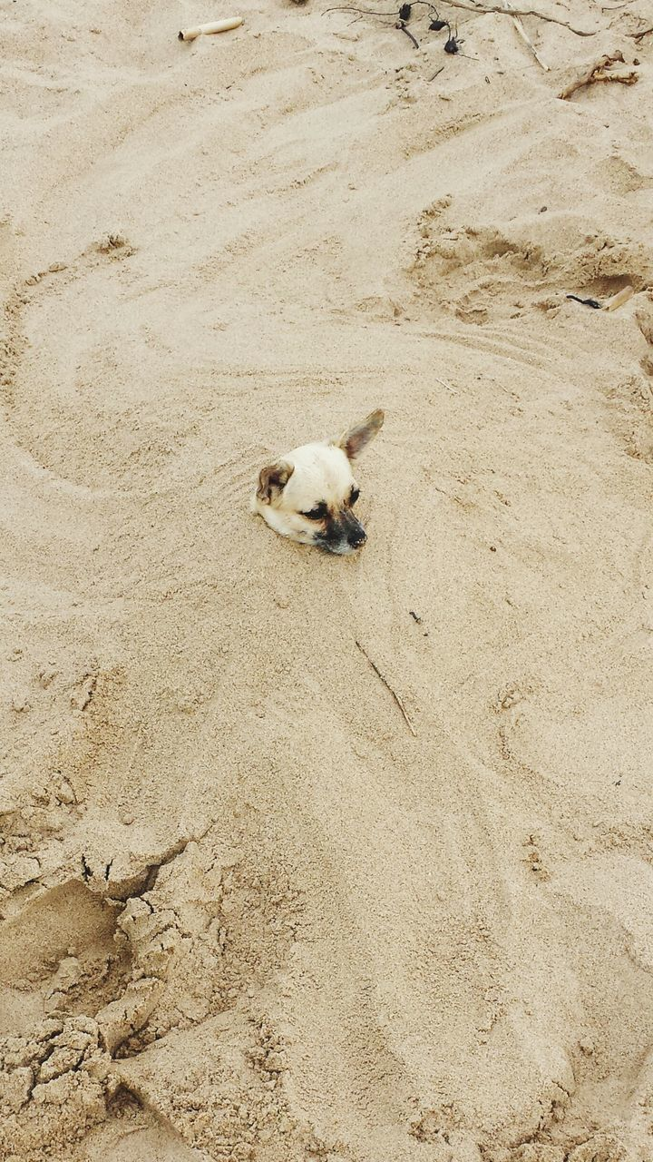 High Angle View Of Dog On Sand At Beach