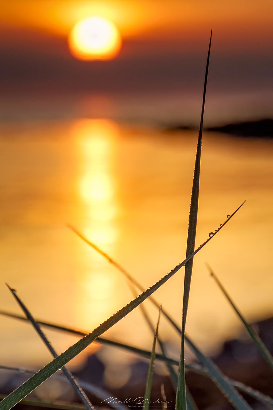 Walk Me Out In The Morning Dew Sun rising behind some reeds covered with dew drops Baltic Sea Beauty In Nature Close-up Day Depth Of Field Dew Droplets Focus On Foreground Golden Hour Morning Morning Light Nature No People Orange Color Outdoors Reeds Relaxing Sea Serenity Sky Sun Sunrise Sunset Tranquility Water First Eyeem Photo