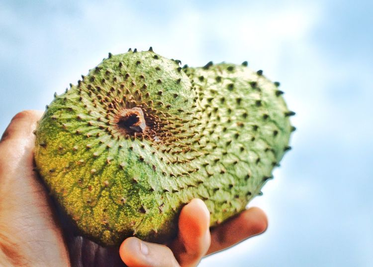 Soursop Cherimoya Nature Healthy Eating Textures And Surfaces Uganda  Outdoors Homegrown Food Tropics Medicinal Flavours Of The World Flavour Flavours Africa African Food Tropical Tropical Paradise Fruit Food And Drink Tropical Fruits Freshness Growth