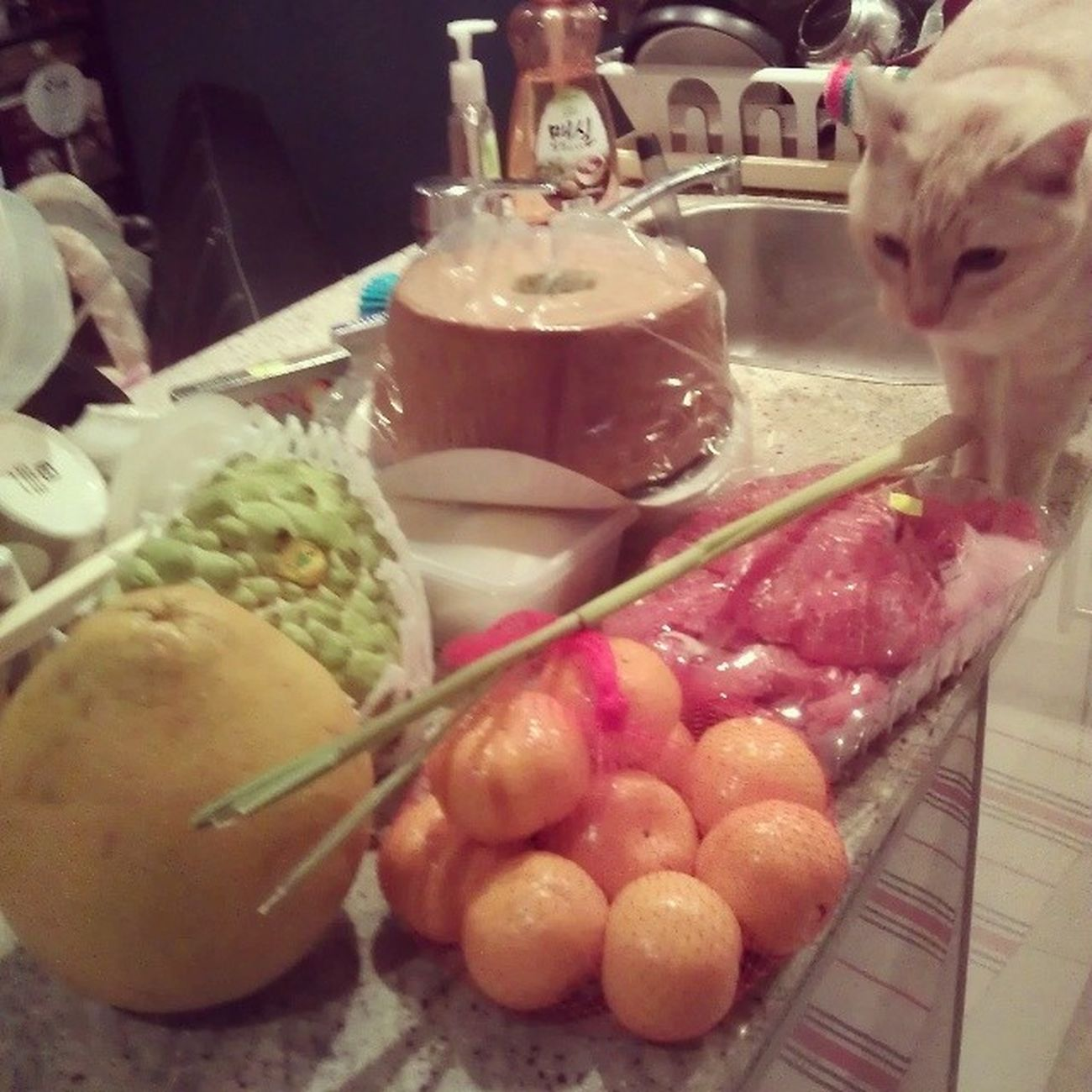 Creamio seemed all Excited at the Goodies we brought back from Cabramatta today