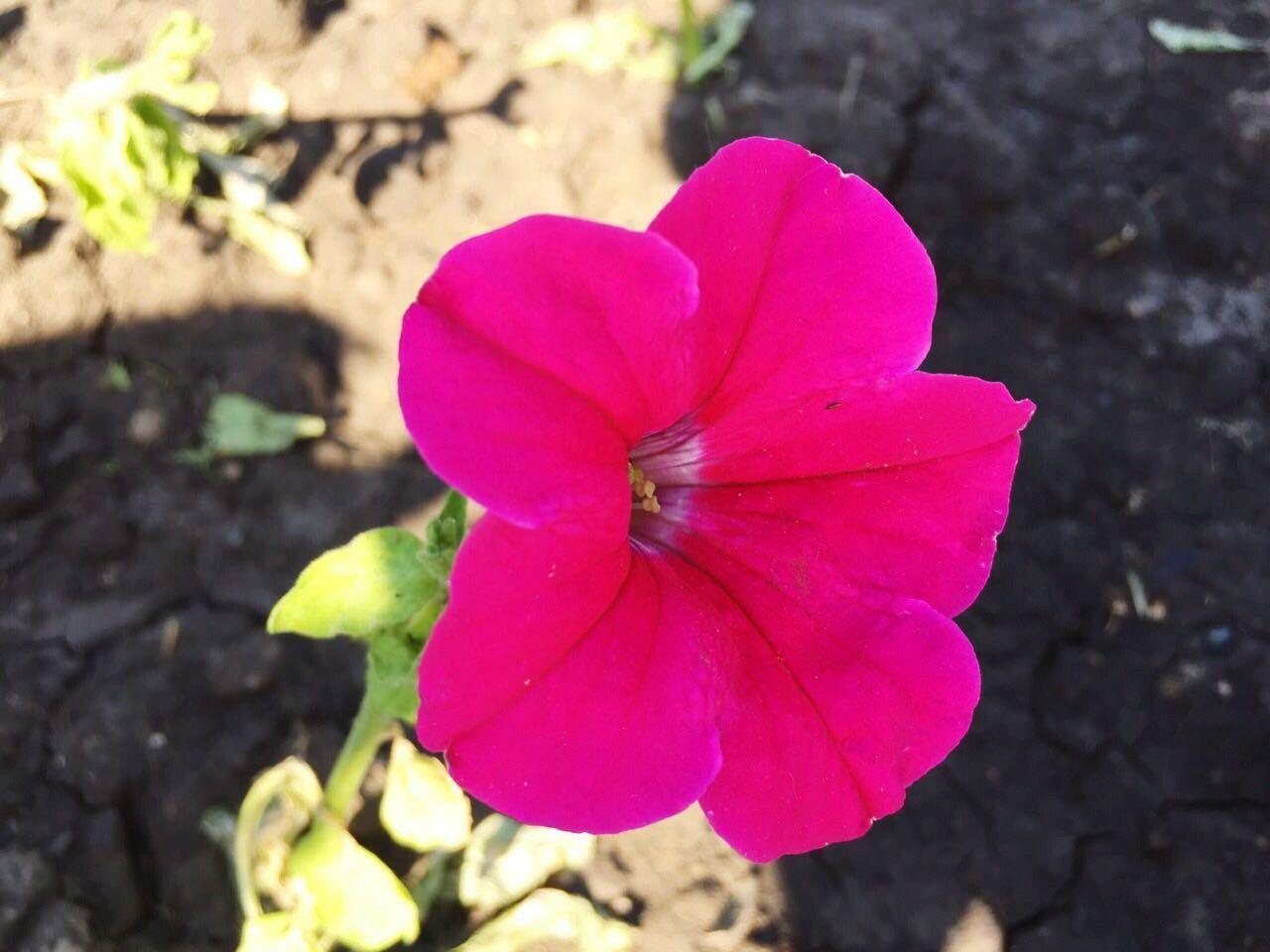 цветы красноярск роев ручей Отдых First Eyeem Photo