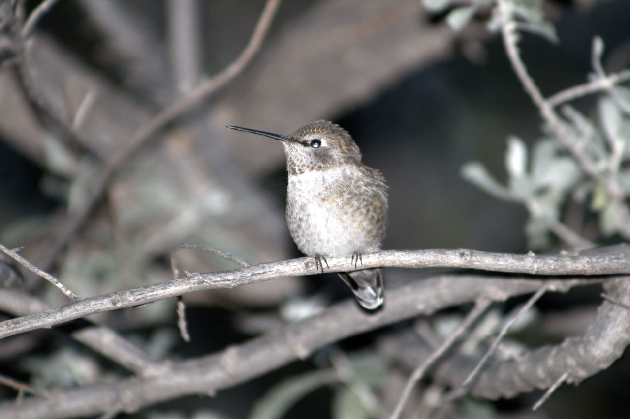 Animal Themes Animals In The Wild Beginnings Bird Botany Close-up Day Depth Of Field Focus On Foreground Growing Hummingbird Leaf Nature New Life No People One Animal Perching Selective Focus Stem Wildlife Zoology