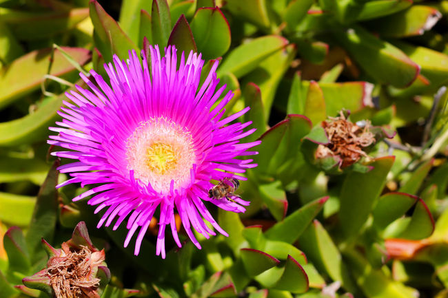 Beauty In Nature Blooming Blossom Close Up Close-up Day Flower Flower Head Flowers Focus On Foreground Fragility Freshness Greece Growth In Bloom Lesbos Lesvos Nature No People Outdoors Pink Color Pink Flower Plant Purple Flower Softness