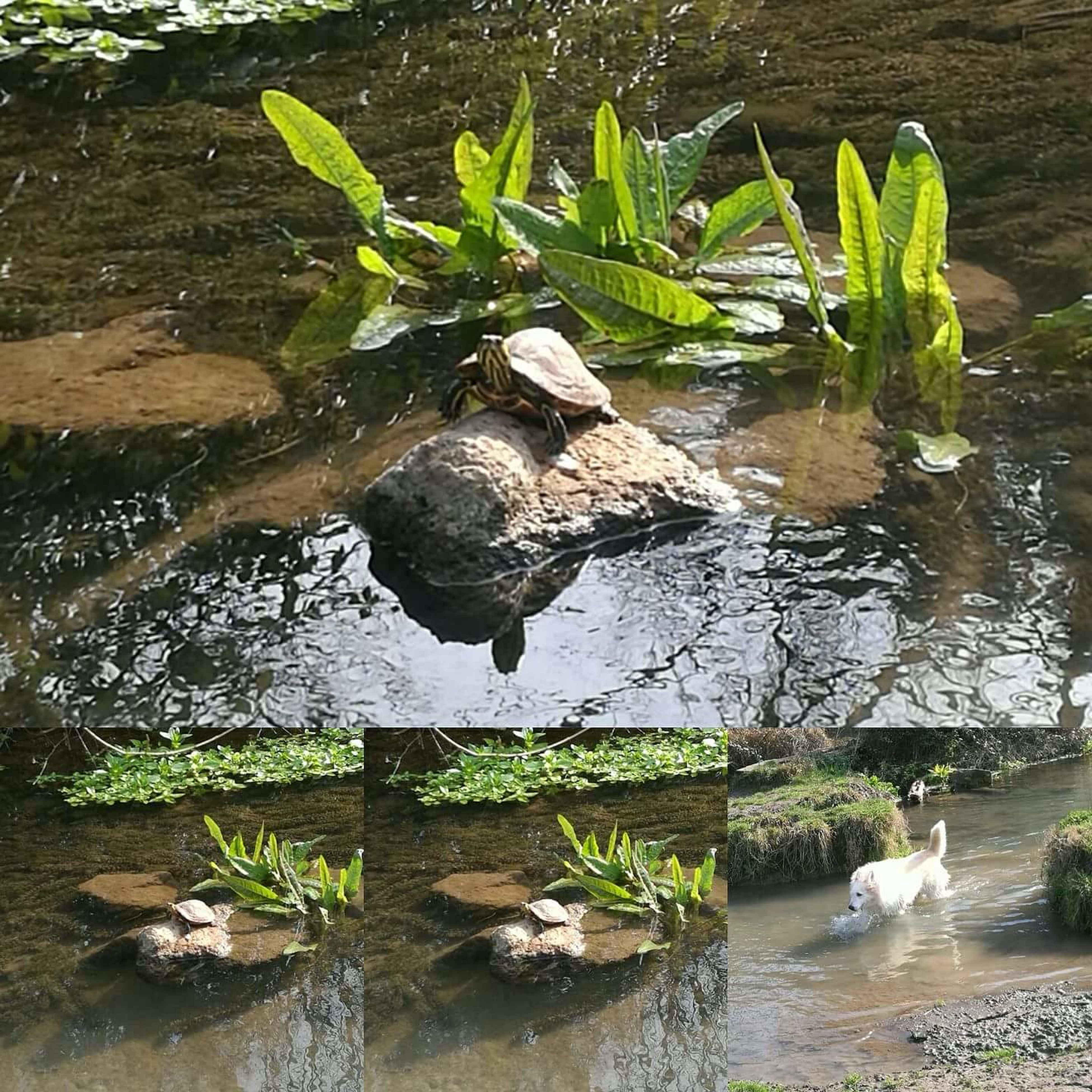 water, rock - object, nature, day, plant, green color, no people, growth, reflection, high angle view, waterfront, outdoors, lake, beauty in nature, leaf, animals in the wild, animal themes