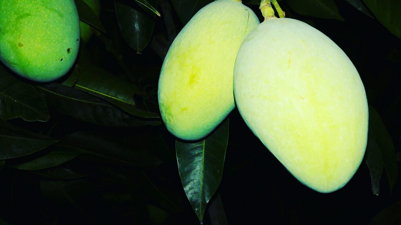 Mango Green Color Healthy Eating Fruit Freshness Food My Home