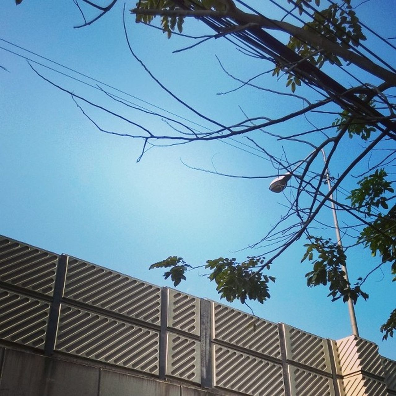low angle view, built structure, architecture, tree, sky, day, outdoors, building exterior, clear sky, blue, no people, cable, nature