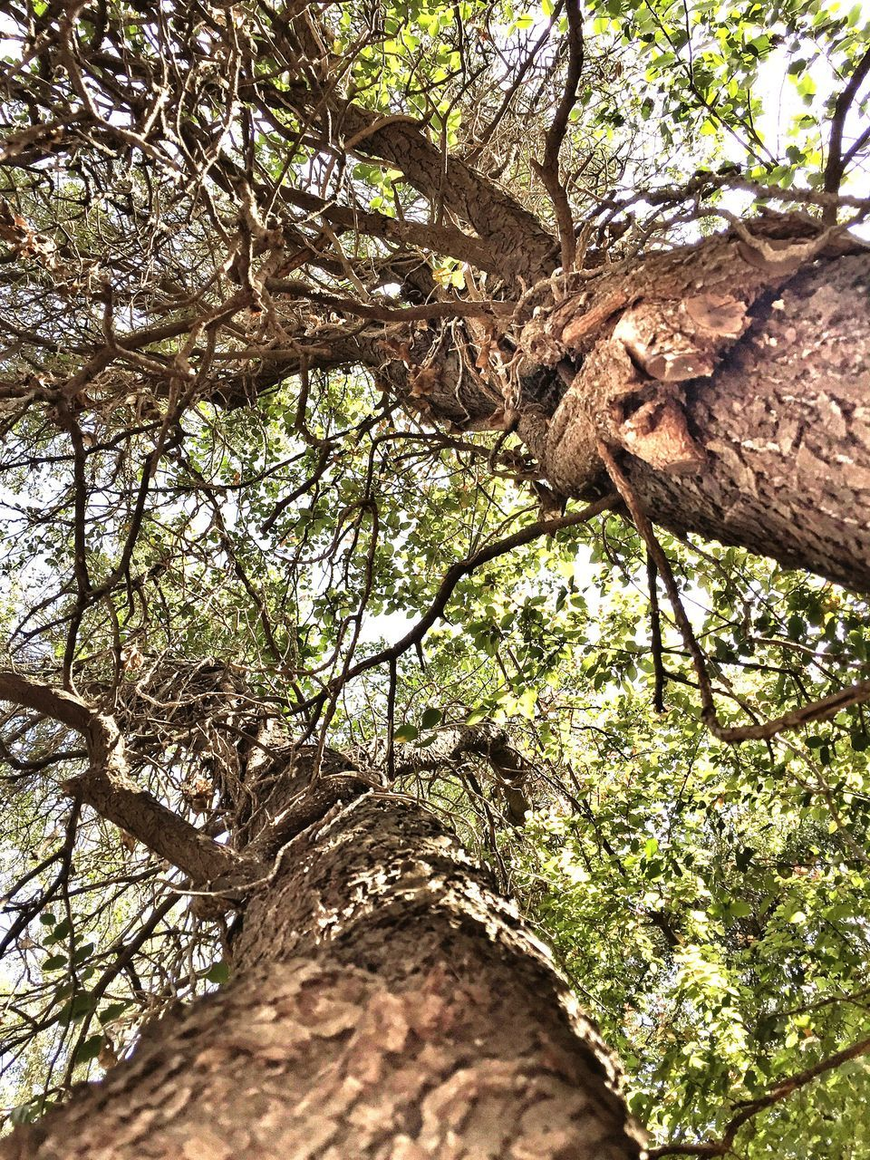 tree, tree trunk, branch, low angle view, nature, growth, day, outdoors, no people, beauty in nature, forest, bark, close-up, rope swing, animal themes