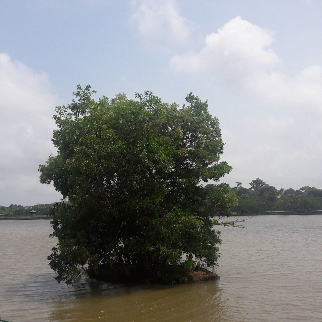 tree, sky, water, nature, cloud - sky, tranquil scene, tranquility, river, waterfront, no people, day, scenics, beauty in nature, growth, outdoors, plant