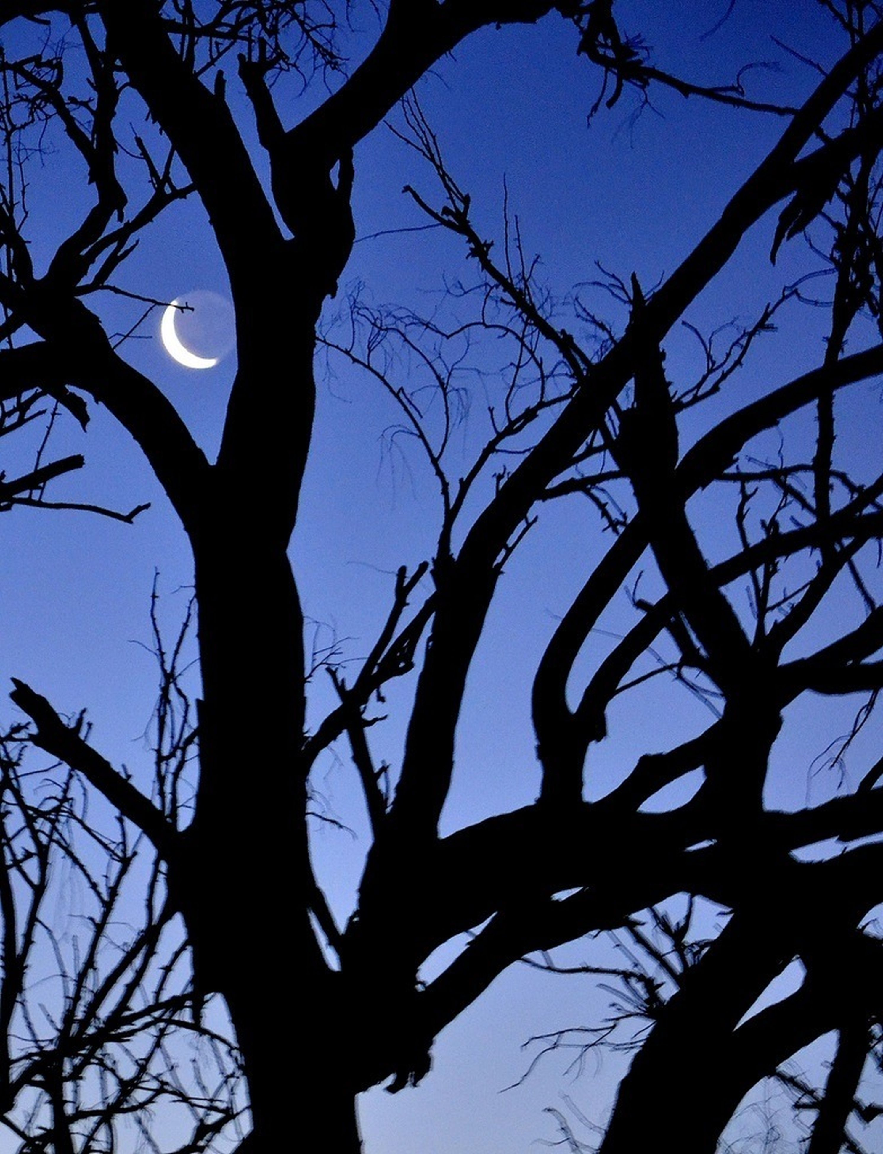 low angle view, branch, tree, silhouette, bare tree, clear sky, sky, nature, blue, tranquility, tree trunk, dusk, outdoors, beauty in nature, no people, sunset, growth, sun, day, sunlight