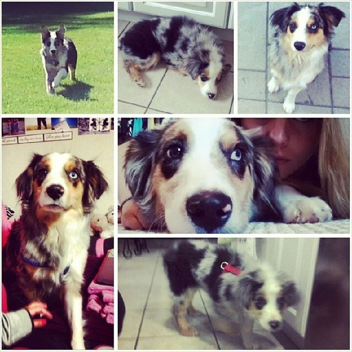 HappyBirthday to the love of my life, Tucker! I cant believe your already 1yearsold . You've grown only three inches bigger because your a Mini Aussie but thats what makes us so compatible because were both small. I cant wait to come home and see you today. Missingmyboy Missinghome Inlovewithmydog Iloveyou