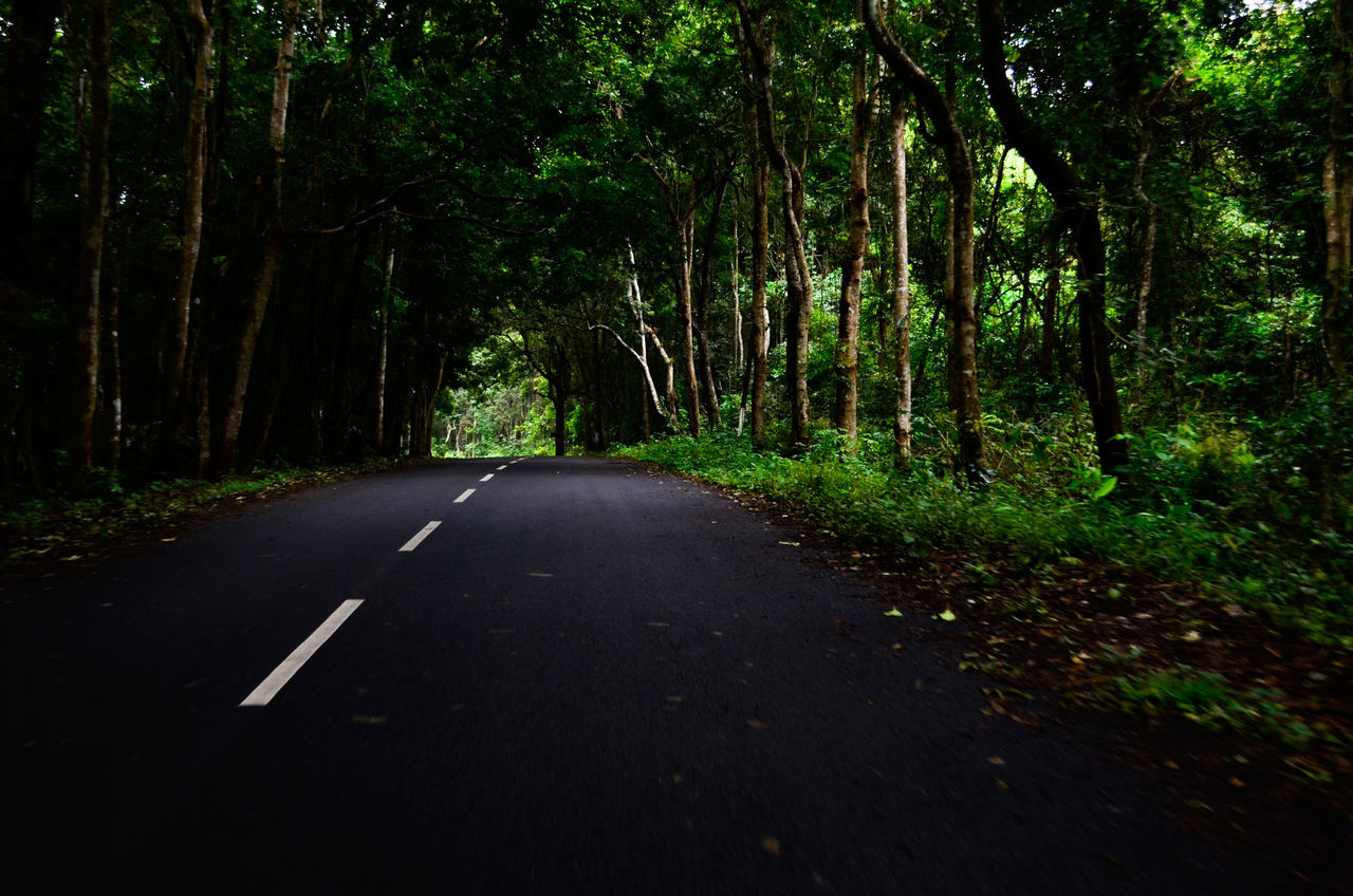 road, the way forward, forest, tree, nature, outdoors, tranquility, no people, day, beauty in nature