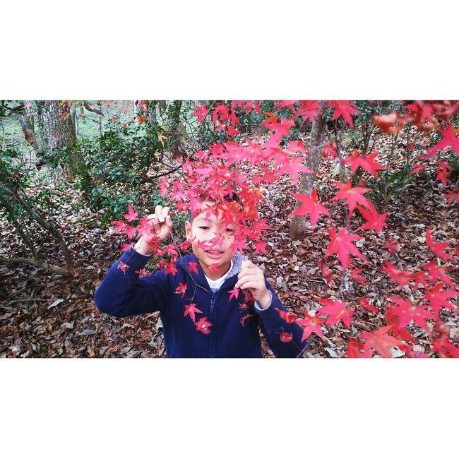 紅葉狩り 紅葉狩り Autumn Autumn Colors Autumn🍁🍁🍁 秋 Red