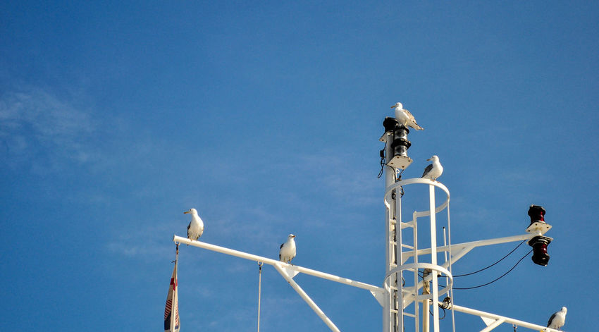 Animal Themes Antenna Bird Blue Calm Clear Sky Cloud Cloud - Sky Croatia Day Low Angle View Nature No People Outdoors Perching Seagull Ship Sitting Sky Yacht Yachting