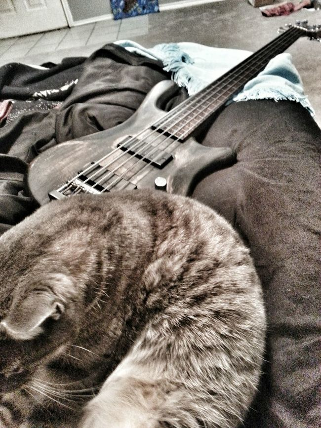 Relaxing Enjoying Life Check This Out Manchaca Atxphotography Composition Life In Motion Freelance Life Safety First! Hdr_captures Bassist BassLife Fretless Lazy Cat