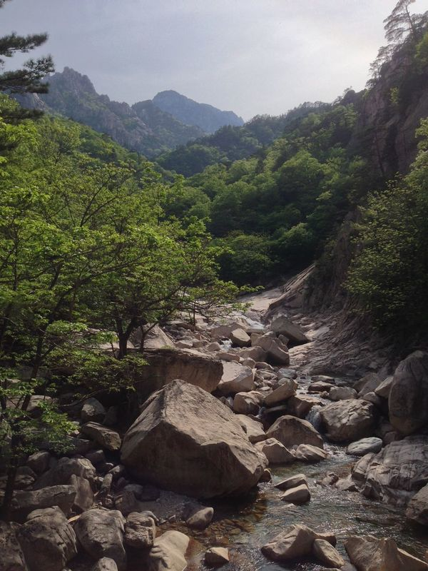 Nature Tree Rock - Object Scenics Beauty In Nature No People Tranquil Scene Landscape Forest Day Outdoors Mountain Sky Seoraksan National Park