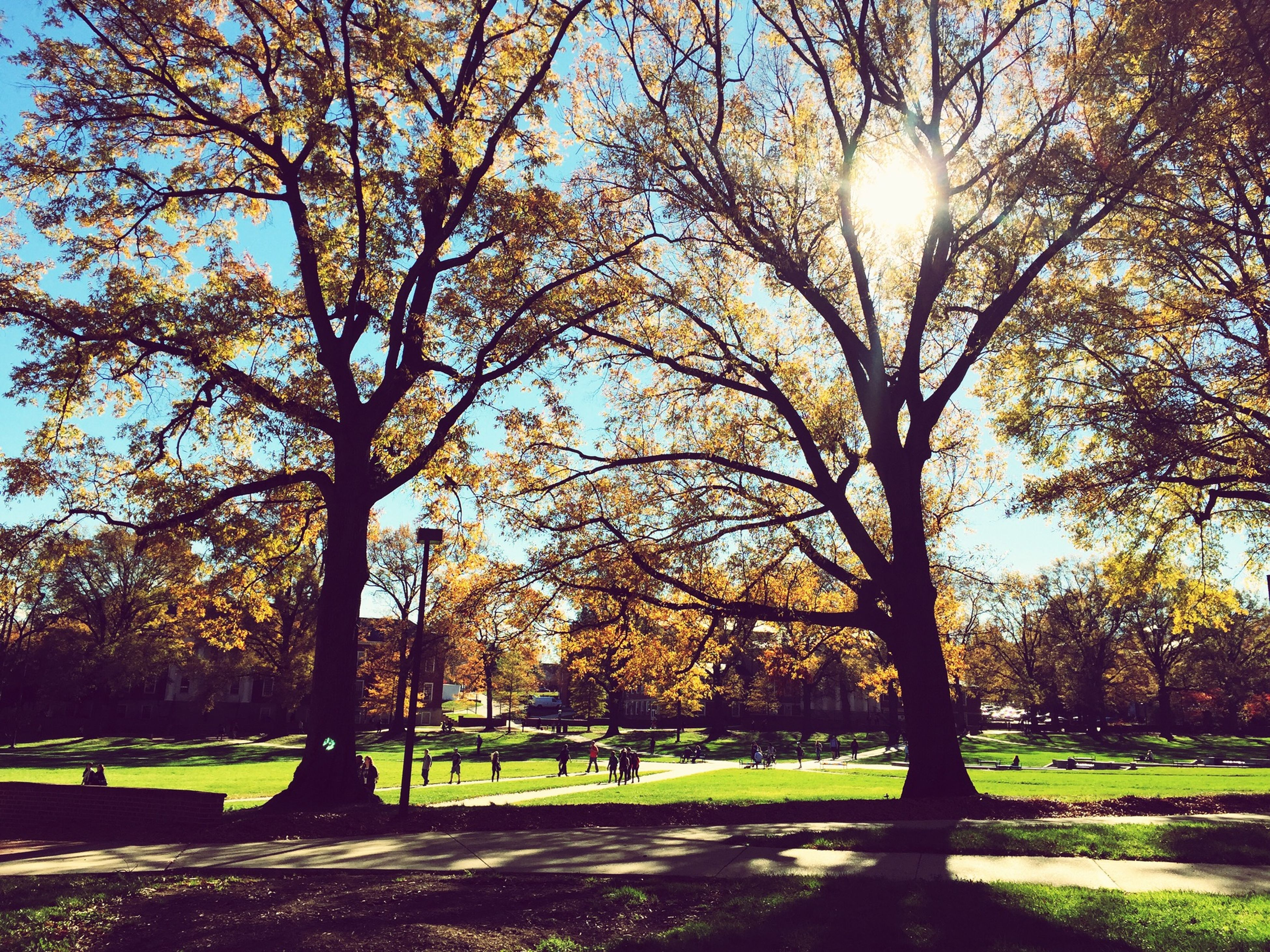 tree, sun, sunlight, park - man made space, sunbeam, grass, tranquility, tree trunk, branch, tranquil scene, lens flare, nature, growth, sky, shadow, scenics, beauty in nature, park, sunny, bench