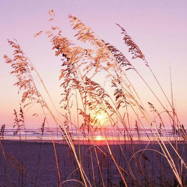 Sunrise in Pink ◆Jacksonville Beach, Florida◆ Pink_nio Nothingisordinary Captures_bythesea Pixoddinary picture_to_keep igaa ig_bliss igersjax onlyinduval