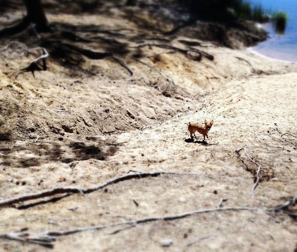 Nature Lakeshore Dogs Happy Dog