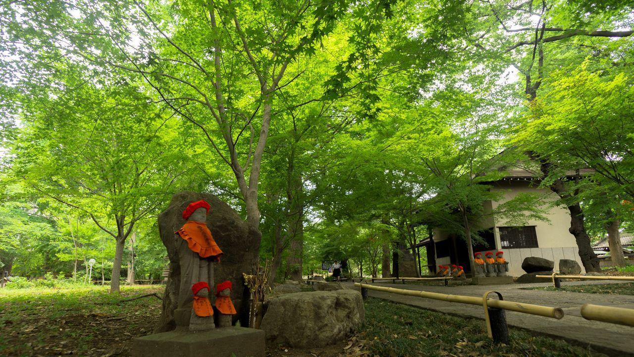 新緑の九品仏浄真寺 Zeisstouit12mm2.8 Tender Green Landscape Landscape_Collection Peace And Love Japanese Temple Praying
