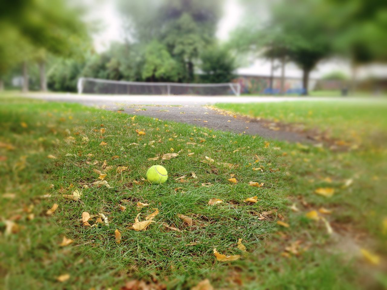grass, green color, ball, selective focus, no people, day, outdoors, nature, growth, close-up, freshness, beauty in nature