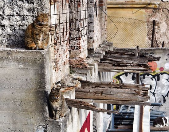 Adapted To The City Animal Themes No People Built Structure Wood - Material Outdoors Architecture Day Animals In The Wild Mammal One Animal Building Exterior