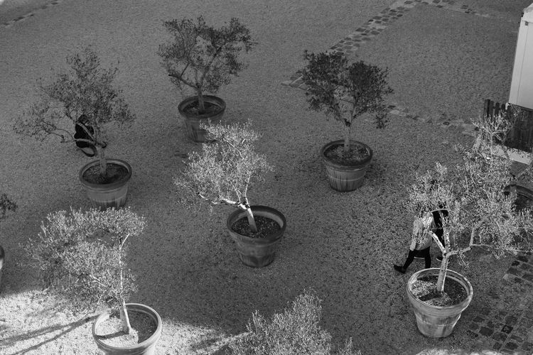 Garden Olivier Jardin Arbres Tree Jardin High Angle View Sand No People Day Outdoors