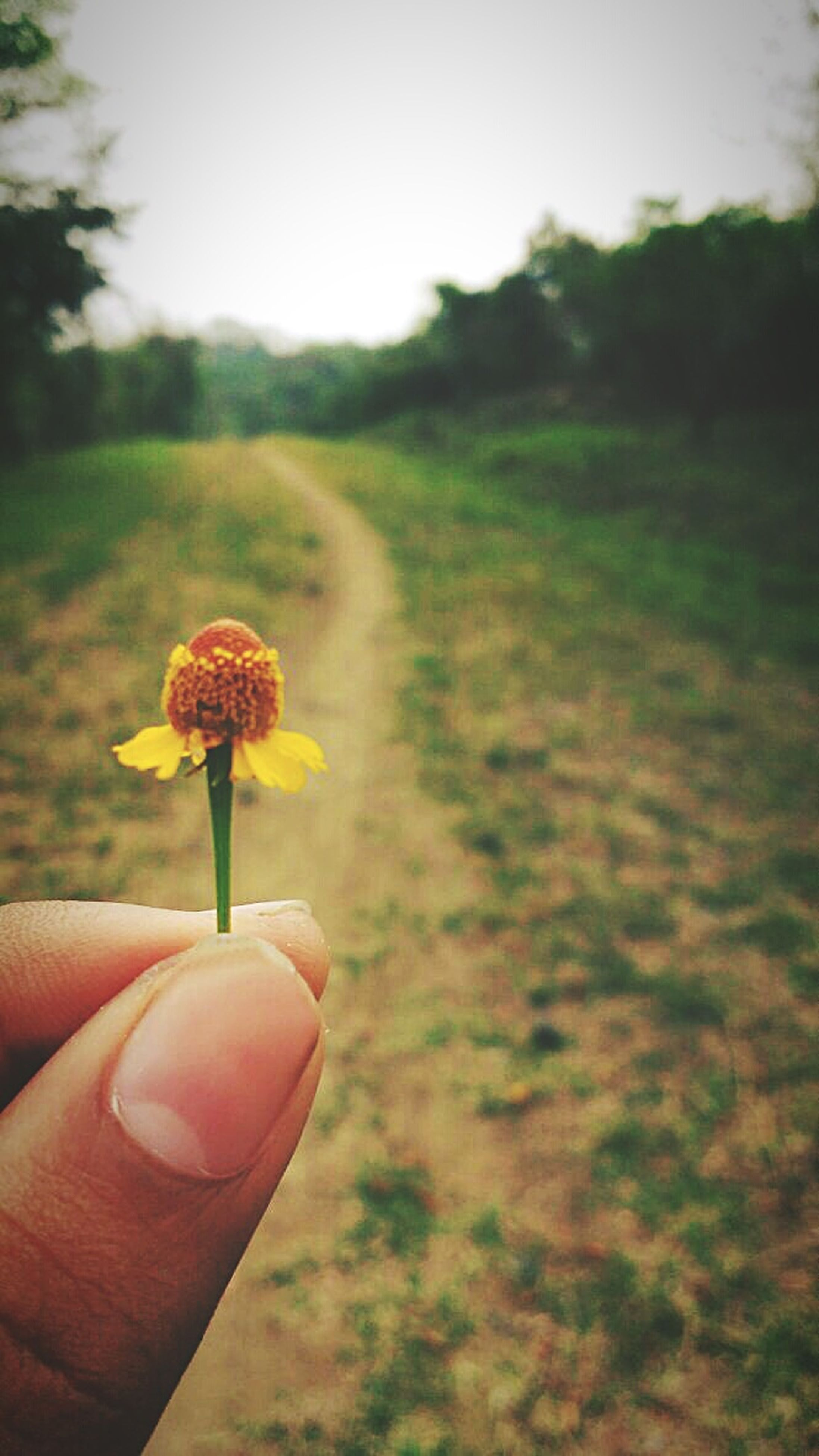 human hand, human body part, one person, field, holding, human finger, flower, nature, personal perspective, real people, landscape, unrecognizable person, plant, focus on foreground, beauty in nature, outdoors, poppy, growth, uncultivated, lifestyles, flower head, sky, close-up, wheat, day, tree, freshness, people
