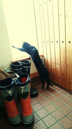 Cat 朝の猫